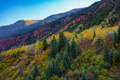 Maroon Creek Fall Colors in the Colorado Mountains, Aspen (Tony Webster) Tags: colorado maroonbells marooncreekroad aspen autumn fall fallcolors morning mountains trees