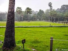 180726-076 Averse (clamato39) Tags: pluie rain angkor angkorwat cambodge cambodia asia asie storm voyage trip