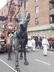 Dog (cn174) Tags: liverpool liverpoolgiants giants liverpoolsdream giantspectacular merseyside albertdocks canningdock dog xoxo babyboy littlegirl