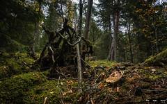 Urskog-3856 (jarud) Tags: 2018 norge norway notodden urskog
