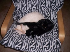 NUS Y BETTY (LOISA FE) Tags: cats familia family hermanos brothers love amor home casa hoar hogar pet blanco negro white black