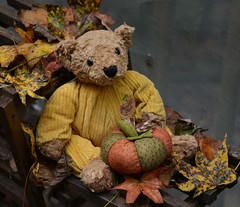 Look What I Found! (BKHagar *Kim*) Tags: bkhagar teddy bear teddybear patrick corduroy pumpkin leaves fall autumn animal toy htbt happyteddybeartuesday