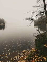 Autumn at Meiko. (Dencku) Tags: höst syksy autumn höstlöv syyslehdet autumnleaf sjö järvi lake dimma fog sumu löv lehti leaf autumncolor höstfärger syksynvärit mulet cloudy pilvi meiko naturskyddsområde luonnonsuojelualue sjundeå siuntio