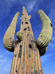 Arizona - Saguaro National Park (Michael.Kemper) Tags: canon eos 6d 6 d canoneos6d canonef1635f4lisusm ef 1635 f4l f4 l is usm voyage travel travelling reise vacation urlaub usa us united states america vereinigte staaten von amerika american southwest amerikanischer südwesten arizona saguaro national park np nationalpark tucson mountain district west bajada loop drive valley view trail cactus kaktus kaktee hike hiking wanderung wandern randonnée randonnee desert wüste spring frühling az