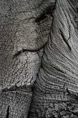 Markings of Time (Broot Thanks for 1 million views!) Tags: fagussylvatica europeanbeech tree bark pattern macro mountauburncemetery october cambridge massachusetts autumn fall