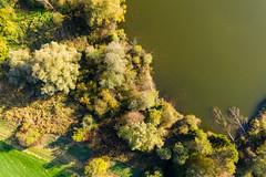 Trees in Water (simon_walser) Tags: tree trees water greenwater wood lake natur nature switzerland dji mavic djimavic dronephotography