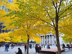 Fall color (classymis) Tags: classymis fall canada yellow leaves fallleaves fallcolor