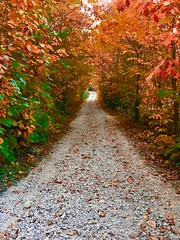 Waldwege im Herbst (Monika Bauer) Tags: herbst autum wald bäume tree natur nature wood bayern bavaria farben color rot braun grün