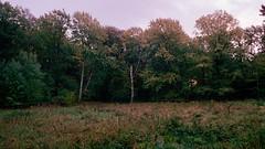Autumn glade (Cosmo_Solomon) Tags: om2n portra400
