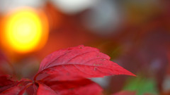IMG_6090a (matek 21) Tags: bokeh eos 50mm rebel autumn