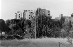 Roma, via di Pietralata ottobre 2018 (Nonnismi) Tags: roma rome pietralata bw bn analogphotography ilford 3200asa buildings concrete trees