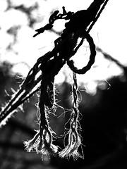 Light in Ropes B&W (zeevveez) Tags: זאבברקן zeevveez zeevbarkan canon bw rope light עמקהמצלבה