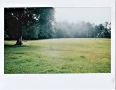 Sheep in Pasture (M Photographs) Tags: mp280 scanned fuji 300 instax wide nikkorstax sheep