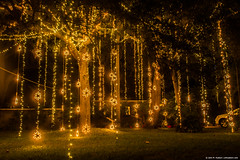 2015.01.01.3448 Vines of Light (Brunswick Forge) Tags: grouped florida 2015 atlanticbeach architecture christmas lights winter newyearsday night newyearsnight favorited
