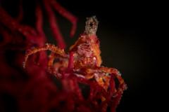 IMG_7102 (Gil Xavier) Tags: underwater scuba philippines canon fantasea g7xmk2 cebu moalbal turtlebay