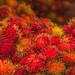 Closeup of Fresh Rambutans