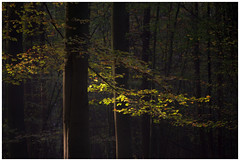 Light and the forest (Rob Schop) Tags: forest woodland firstlight sonya6000 morning sony55210oss pola hoyaprofilters veluwe speulderbos leaves tele trees autumn