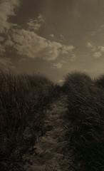 Path into the unkown (Rosenthal Photography) Tags: dänemark dünen 20180805 color ff135 analog juli rodinal12520°c18min c41 houvig urlaub asa200 olympus35rd sommer fujisuperia200 landscape denmark danmark beach northsea dunes summer july olympus olympus35 35rd 40mm f17 fuji superia rodinal 125 epson v800 path pathway track trail