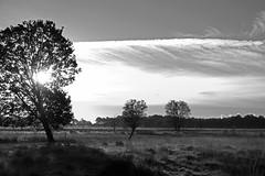 Veenland Sunrise (Andreas Steffen) Tags: sonnenaufgang sunrise trees bäume wolken clouds schafe sheep sky himmel gras grass fuji fujifilm xt20