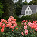 A cottage and roses