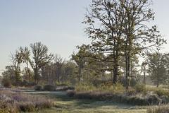 _IMG2404 (Henk de Regt) Tags: the netherlands gelderland natuur nature landscape grass bos forest trees zonsopkomst sunset sundown zonsondergang swamp nederland veluwe landschap gras water bomen moeras