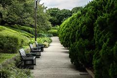 Bench in a park in Yokohama (will-valente) Tags: tree picoftheday 元町中華街 港の見える丘公園 横浜 motomachichukagai japon japan yokohama minatonomierupark nature green sky banc bench park parc garden grass