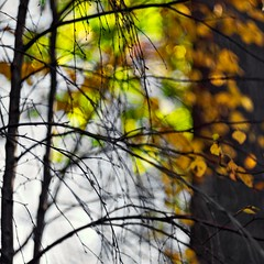 Impression (Stefano Rugolo) Tags: stefanorugolo pentax k5 pentaxk5 helios44258mmf2 helios442 helios abstract impression autumn foliage branches tree manualfocuslens manualfocus vintageprimelens vintagelens primelens m42 depthoffield sky wood