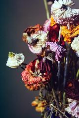 Flo (Marco Cassé) Tags: flower vintage nature home flickr photography fiori vase vaso beauty romantic instagram like color colors