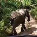Elephants at Lake Manyara