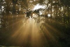 Ochtendlicht (Schagie) Tags: ochtend morning light licht bos bomen forest tree trees sun beams rays early natuur nature stralen zon dawn
