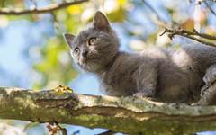Kika (03) (Vlado Ferenčić) Tags: animals animalplanet kitty kittens vladoferencic vladimirferencic catsdogs cats zagorje croatia hrvatska klenovnik nikond600 nikkor8518