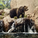 An American grizzly bear at the Cheyenne Mountain Zoo in Colorado Springs, Colorado. Original image from Carol M. Highsmith's America, Library of Congress collection. Digitally enhanced by rawpixel.