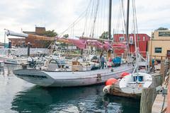 Home for a while (desert11sailor) Tags: sylvinawbeal schooner sailboat harbor redsail haroldburnham gloucester