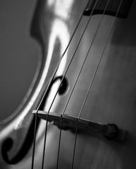 Bass Curves (Dalliance with Light (Andy Farmer)) Tags: bass instrument bw