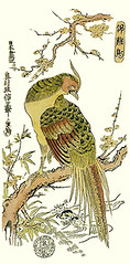 Plum and golden pheasant (Japanese Flower and Bird Art) Tags: flower plum prunus mume rosaceae bird golden pheasant chrysolophus pictus phasianidae masanobu okumura ukiyo woodblock print japan japanese art readercollection