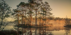 Misty island (jasonhudson2) Tags: misty island dawn trees light water tarn dam high pines reflections sony lakedistrict cumbria