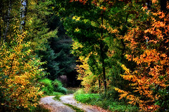 Fall in Central Poland (Mateusz Majewski) Tags: forest fall autumn road colors country nature trees