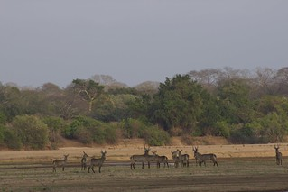 Mozambique Hunting Safari 21