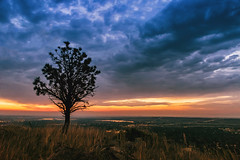 One Pine Day (Carl's Captures) Tags: tree silhouette one solo solitary lonely form pine conifer pinus coniferophyta coniferae flora landscape dawn morning sunrise vista bouldercolorado daybreak orange pink purple cloudy moody hazy ncarmesalaboratory lab nationalcenterforatmosphericresearch aerial view summer august skies bouldercounty continentaldivide layers grasses sunup firstlight lakes reservoirs reflections cityscape horizon nature outdoors weather nikond7500 sigma18300 photoshopbyfehlfarben thanksbinexo