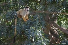 _DSC2359 (Lisbeth Gasser) Tags: animal safari france parc africaine sigean savane faune mammifère fôret pelouse champ terre
