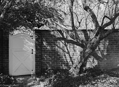 Gardens at UVa (davekrovetz) Tags: mamiya mamiya645 charlottesville gardens gates trees shadows virginia monochrome trix kodak film analog masonry bricks history architecture