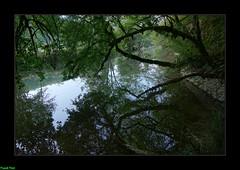 Miroir sur le Lison - Myon (francky25) Tags: miroir sur le lison myon franchecomté doubs rivière étiage