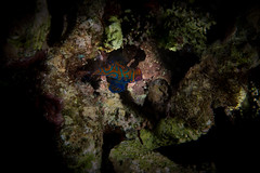 IMG_7084 (Gil Xavier) Tags: underwater scuba philippines canon fantasea g7xmk2 cebu moalbal turtlebay