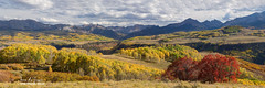 Rocky Mountain Valley Of Color Panoramic View (Striking Photography by Bo Insogna) Tags: ridgeway telluride panorama panoramic pano views rockymountains trees forest wilderness backcountry highcountry colorado autumn fall foliage colorful calm peaceful mountains nature landscapes large wide travel coloradolandscapes jamesboinsogna photography