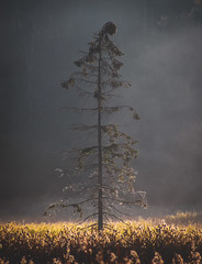 Lone standing tree (marvinkingston) Tags: bavarian bayerischer bayern wald forest park national tree grass weide nature naturescape natural landscape fog morning foggy mood photo photography foto fotografie zoom canon eos 80d 18200 tamron lens biggest flickr daily shot beautiful color arber germany deutschland bavaria lone moment capture travel