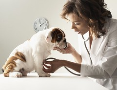 How Do Dogs Get Parvo? (katalaynet) Tags: follow happy me fun photooftheday beautiful love friends