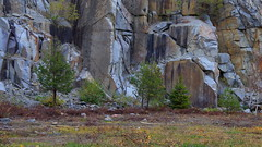The Wall (Mikael Wallman Photography) Tags: quarry rocks tree