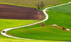 The road in morava (Darekdarecky) Tags: landscape morava czechrepublik grass grassland road fields trees car green