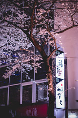 Nihonbashi - Tokyo, Japan (inefekt69) Tags: japan tokyo nihonbashi sakura dori street cherry blossoms flowers nature spring hanami nikon d5500 日本 東京 さくら 桜 花見 tree road people yaesu 八重洲さくら通り 日本橋 tumblr
