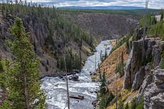 Lewis River, Yellowstone National Park (Rick Knepper) Tags: fujifilmgfx50s gf45mmf28rwr
